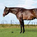 quarter horse stallion picture